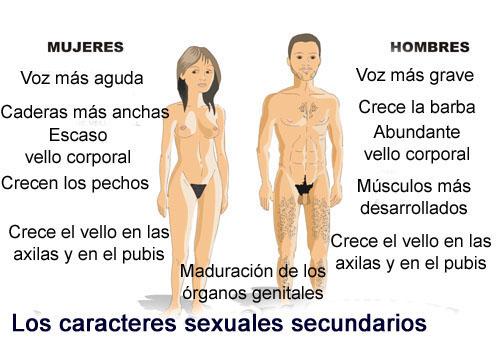 Caracteres sexuale primarios del hombre y la mujer