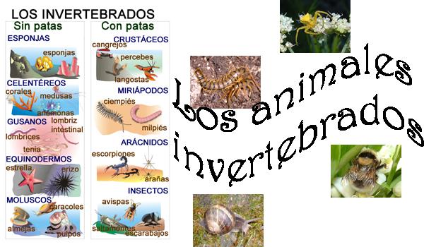 Dibujar 3 animales invertebrados - Imagui