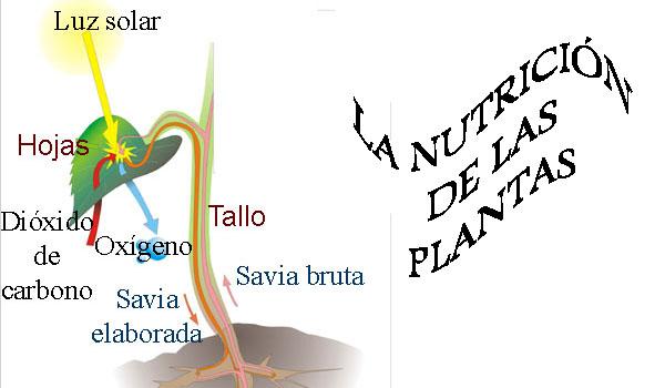 nutricion_por.jpg (600×350)